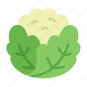 cauliflower, colour, food, green, health, leaf, vegetable icon