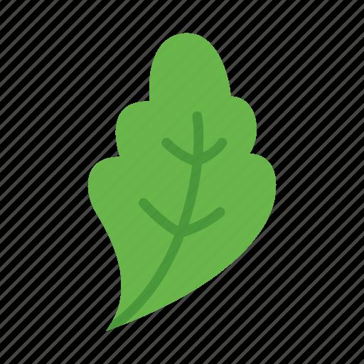 colour, food, green, kale, leaf, lettuce, vegetable icon