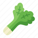 celery, colour, food, garden, health, salad, vegetable icon