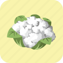 cauliflower, diet, fresh, meal, nutrition, tasty, vegetable icon