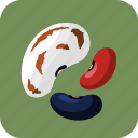 bean, common, food, healthy, meal, nutrition, vegetable icon