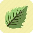 food, leaf, meal, mint, spice, tasty, vegetable icon
