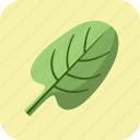 diet, fitness, food, healthy, nutrition, spinach, vegetable icon