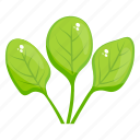 organic leaves, spinach, vegetable leaves, spinach leaves, vegetable icon