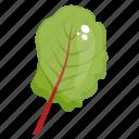 spinach, spinach leaf, organic leaf, vegetable leaf, vegetable icon