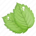 eco leaves, herbal leaves, leaflet, mint leaves, plant leaves icon