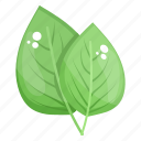 birch leaves, eco leaves, herbal leaves, leaflet, plant leaves icon