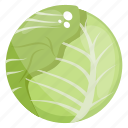 cabbage, cabbage flower, organic cabbage, salad vegetable, vegetable icon