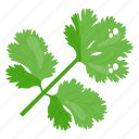 coriander, eco leaves, leaflet, leaves, plant leaves icon