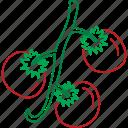vegetable, cherry tomato, organic, tomatoes icon