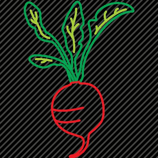 food, organic, radish, red vegetable, salat, vegetables icon