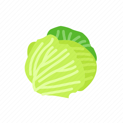 cabbage, food, green cabbage, organic, vegetable, vegetarian icon