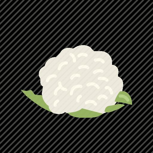 cauliflower, farm, food, organic, vegetable, vegetarian icon