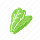 food, lettuce, organic, romaine lettuce, vegetable, vegetarian icon