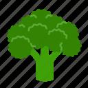 broccoli, food, greens, leafy, vegetable, veggies, organic