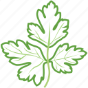 parsley, parsley leaf, parsley sauce, parsley tea, vegetables icon icon