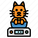 care, cat, pet, weight, weinting icon