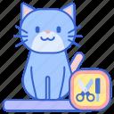 cat, cat grooming, grooming