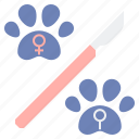 neuter, spay, sterilization icon