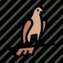 pigeon, viking, bird, dove, communication