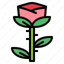 beauty, flower, nature, rose icon