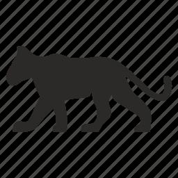 animal, cat, child, lion, puma, wild icon
