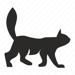 animal, cat, home, kitty, pet icon