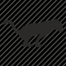 animal, cat, hunter, jaguar, puma icon