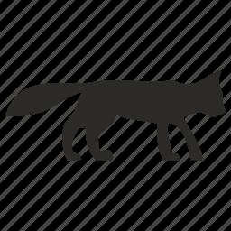 animal, cat, wild icon