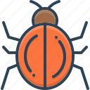 animal, beetle, bug, insect, ladybug, nature