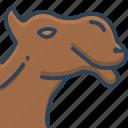 animal, camel, face, pet