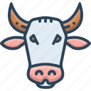 animal, cow, face, farm, pet