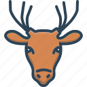 animal, deer, face, wildlife, zoo