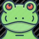 animal, animals, frog, froggy, nature, wildlife