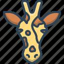 animal, face, giraffa, giraffe, zoo