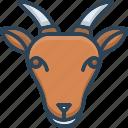 animals, face, goat, pet