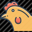 animal, bird, chicken, hen