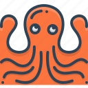 animal, octopus, pulpo, squid, wildlife