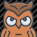 bird, education, owl, wisdom