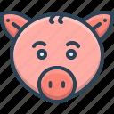 animal, face, pet, pig, pork