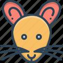 animal, mouse, rat, raton