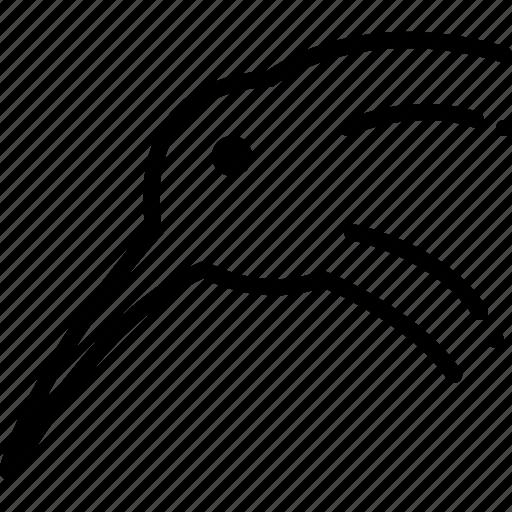 bird, kiwi, okarito icon