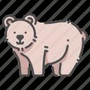 animal, bear, carnivore, fur, mammal, wildlife, zoo icon