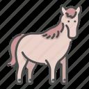 horse, mammal, mustang, running, wildlife, zoo icon