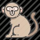 animal, monkey, wildlife, zoo icon