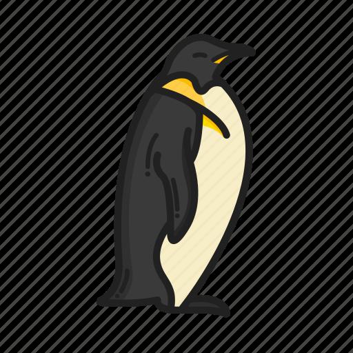 animalpack, arctic, bird, glacier, penguin, water, winter icon