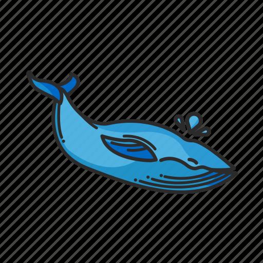 animalpack, logo, ocean, sea, sealife, water, whale icon