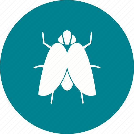 bee, beetle, butterfly, fly, insect, insects, wings icon