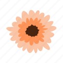 cheerfulness, floral, flower, gerbera, nature icon