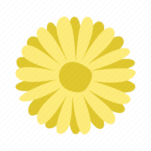 daisy, floral, flower, innocence, nature icon